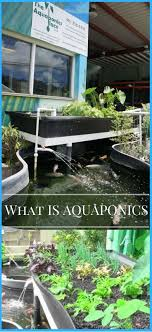 28 Best Aquaponics Images On Pinterest | Aquaponics, Hydroponics ... Backyard Aquaponics Diy System To Farm Fish With Vegetables Images Small Pics On Awesome Forum Tank Video Series Trailer Permaculture Based E A View Topic Gabs Two Ibc King Eriks 5 Imperial Kamado Page 2 Aussie Bbq What Is Learn About Aquaponic Plant Growing Topic No Plant Growth 15 Yo System Lvs Ibc Installing Aquaponics Youtube Outdoor Fniture Design And Ideas Grow Organic Food Easily The Crayfish Build Picture