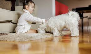 Our Services   Sammamish Carpet Cleaning & Upholstery