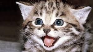 kitty cat kitty cat wallpaper 1366x768 13555