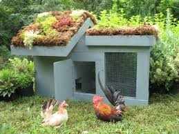 37 chicken coop designs and ideas 2nd edition homesteading