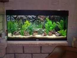 aquarium d eau douce le tour de l aquariophilie juwel 180 album de crysis