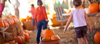 Celebrate Highwood Highwood Packs In The Pumpkins At Annual Fest by 30 Best Things To Do In Chicago With Kids This Fall Mommy Nearest