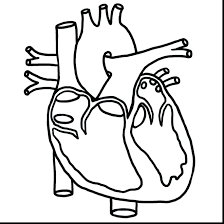 Human Heart Printable Coloring Pages Anatomy Page Impressive Diagram Science Middle School Colouring Full Size