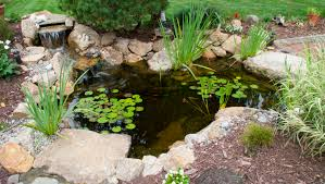 Aquascape Patio Pond 40 by Pond Packages Signature Pond U0026 Patio Signature Pond U0026 Patio