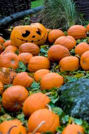 Daves Pumpkin Patch Tampa by 572 Best Halloween Jack O U0027lanterns Images On Pinterest Happy