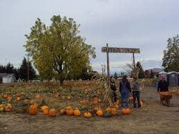 Roloffs Pumpkin Patch In Hillsboro Or by The 12 Most Charming Pumpkin Patches In Oregon For 2017