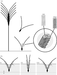 Actuation Systems In Plants As Prototypes For Bioinspired Devices ... Flickr Photos Tagged Heltotrichon Picssr Protect Your Pet Against Cheat Grass And Foxtail Research Spotlight Using Phenology To Help In The Fight Laba1 A Domescation Gene Associated With Long Barbed Awns Interesting Stipapulchra Deadly When Dry 10 Things Know About Plant Dev Agrilife Triticale Offers Grazing Benefits Options Isolated Ear Of Wheat With Stock Photo Image 36250058 Vascular Plants Of Gila Wilderness Bromus Carinatus Dogs Risks Symptoms Treatment Petmd Fileoplismenus Undulatifolius Awnsjpg Wikimedia Commons Diversity Free Fulltext Barley Developmental Mutants The