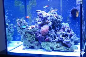 Reef Tank Rockscape: How To Drill And Cement Your Live Rock | Gmacreef Is This Aquascape Ok Aquarium Advice Forum Community Reefcleaners Rock Aquascaping Contest Live Rocks In Your Saltwater Post Your Modern Aquascape Reef Central Online There A Science To Live Rock Sanctuary 90 Gallon Build Update 9 Youtube Page 3 The Tank Show Skills 16 How Care What Makes Great Large Custom Living Coral Aquariums Nyc