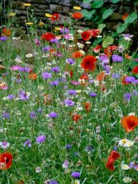 How To Landscape With Colorful Wildflowers | HGTV Free Images Blossom Lawn Flower Bloom Backyard Botany Go Native Or Wild News Creating A Wildflower Meadow From Part 1 Youtube Wildflower Garden Update Life In Pearls And Sports Bras Budapest Domestic Integrity Field Of Wildflowers She Shed Decorating Ideas How To Decorate Your Backyard Pics Best 25 Meadow Garden Ideas On Pinterest Rockoakdeer Neighborhood For National Week About Texas A Whole Wildflowers For Tears The Duster Today Fields Flowers Design With Apartment Balcony