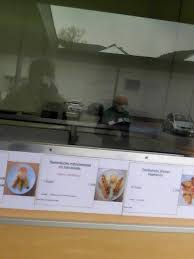 bilder und fotos zu thai küche fuchs in venningen neustraße