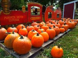 Goebbert Pumpkin Patch In Barrington Il by Don U0027t Miss These 10 Great Pumpkin Patches In Illinois