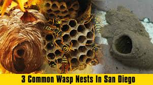 3 common wasp nests in san diego bee best bee removal