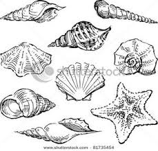 Clip Art Image Seashells In Black and White