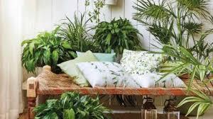 jungle zimmerpflanzen als grüne deko otto