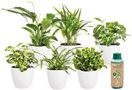 ecoworld luftreinigende zimmerpflanzen 6er set verschiedene arten zur deko luftreinigung für gesundheit entspannung gegen stress tolles