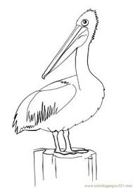Pelican Bird Coloring Page Pictures