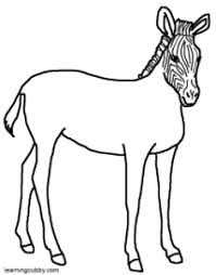 Tiger Without Stripes Coloring Page Zebra Colouring Pages