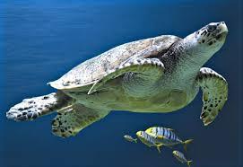 aquarium la rochelle just can t wait to about it the