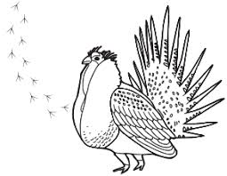 Merry Grouse Animal Coloring Pages Kids Seriously Sage Book