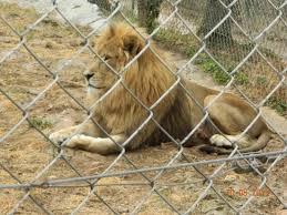 photo de zoo fauverie du faron toulon tripadvisor
