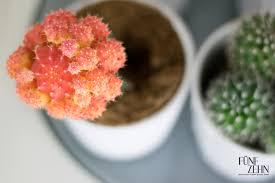 mein kleiner grüner kaktus nummer fünfzehn