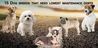 Low Shedding Dogs In India by Low Maintenance Dogs Top 15 Low Maintenance Dogs