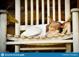 Cute Dog Curled Up In A Rocking Chair Stock Image - Image Of Content ... These Elder Dogs Are Missing Someone From The Rocking Chair Favogram Puppy Dog In Tadley Hampshire Gumtree On A Stock Photo Download Image Now Istock Vintage Grandpa Man Wdog Pipe Rocking Chair Tirement Fund Bank Taking Akc Trick To The Next Level Top Notch Toys Miniature Schnauzer Wooden Lessons From Part Two Mothering Spirit Whats A Good Rocking Chair Quora Hd Welcome Are Love Puppies Lovers