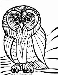 Owl Coloring Page Bird