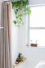 Plants In Bathroom Feng Shui by Best 25 Plants In Bathroom Ideas On Pinterest Bathroom Plants