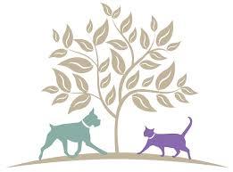 burke animal clinic burke forest veterinary clinic veterinarians in springfield va