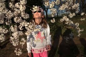 Emmaus Halloween Parade 2017 by 2017 National Cherry Blossom Festival Faq Wtop