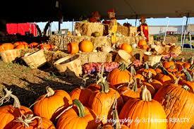Big Orange Pumpkin Patch Celina Texas by Casey U0027s Pumpkin Patch Frisco Tx