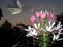 Attracting Insects To Your Garden by Draw Nocturnal Creatures To Your Garden Hgtv