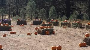 Pumpkin Patch Reno by Pumpkin Trains 2017