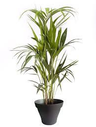 plante d駱olluante bureau 91 best plantes d intérieur avec pots noir images on