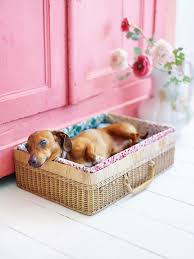 Dog Stairs For Tall Beds by 14 Adorable Diy Dog Bed Cheap Pet Beds