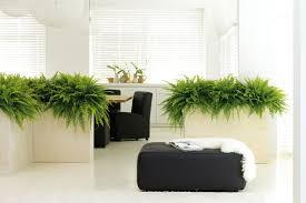 hydropflanzen kunstpflanzen pflanzgefäße as hydrokultur