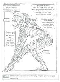 Medical Coloring Book The Anatomy Brain Answers Anatomical