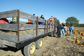 Pumpkin Festival Cleveland Ohio by Hayrides In Cleveland And Northeast Ohio