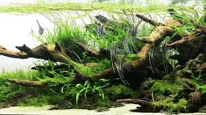 Most Beautiful Aquascapes Underwater Landscapes - YouTube An Inrmediate Guide To Aquascaping Aquaec Tropical Fish Most Beautiful Aquascapes Undwater Landscapes Youtube 30 Most Amazing Aquascapes And Planted Fish Tank Ever 1 The Beautiful Luxury Aquaria Creating With Earth Water Photo Planted Axolotl Aquascape Tank Caudataorg 20 Of Places On Planet This Is Why You Can Forum Favourites By Very Nice Triangular Appartment Nano Cube Aquascape Nature Aquarium Aquascaping Enrico A Collection Of Kristelvdakker Pearltrees