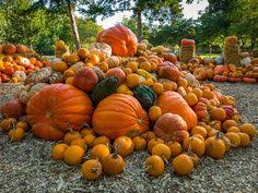 Pumpkin Patch Medford Oregon 2015 by 19 Beautiful Barns To Get You In The Fall Spirit Country Barns
