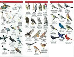 Bird Identification Images Reverse Search Picture With Terrific ... Florida Exotic Bird Sanctuary Infomercial Youtube Birdhouse Garden Arbor Super Start Birds And Houses Way To Attract Backyard Wildlife Habitat Design Ideas Of House Gardening For The How Create A Birdfriendly Fresh Architecturenice Sanctuary Sprouts Up In Spruce Hill Huckleberry Hollow Oasis Beautiful Butterflies Bees Everything You Need Outstanding Hero Residential Gardens Part Ii Audubon New Of North America Poster Species Image On Wonderful