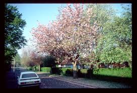 Springtime in Welwyn Garden City 1990