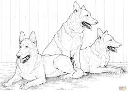 Printable 14 Realistic Husky Coloring Pages 4715