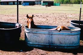 horse meets kiddie pool chronicle forums