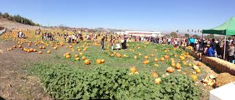 Pumpkin Patch Near Spring Tx by Pomona Pumpkin Patch Pedal Milestone Rides