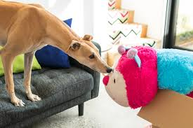 Why Is My Italian Greyhound Shedding by 10 Great Reasons To Adopt A Greyhound Today The Style Insider