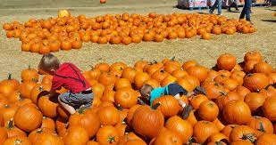 Bates Nut Farm Pumpkin Patch 2014 by The Bell Curve Of Life Teo And Troy At Bates Nut Farm