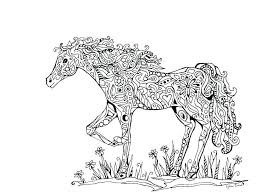 Coloring Realistic Horse Pages For Adults Free Printable Arabian