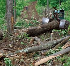 Three Logging Systems: Matching Equipment To The Job | Autumn 2011 ...